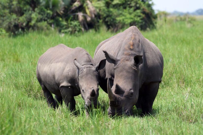 Urlaub in Uganda